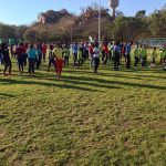 Festivals and Springboks